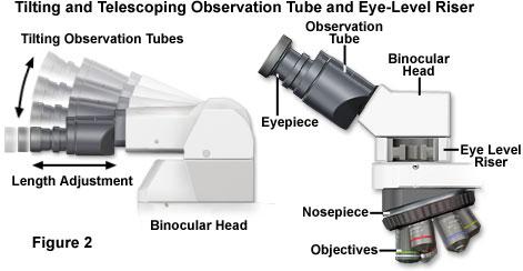 倾斜观察筒的人体工程学设计