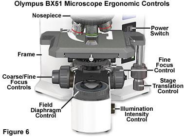 奥林巴斯BX51显微镜人体工程学设计