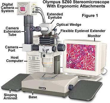 SZ60体视显微镜人体工程学视图