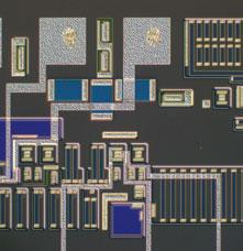 微分干涉图像