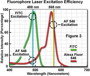 荧光团激光激发效率