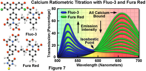 用fluo-3和fura red进行钙比率滴定