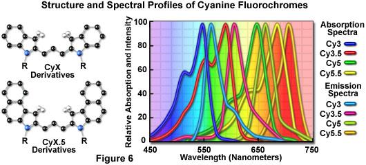 花青荧光染料的结构和光谱分布